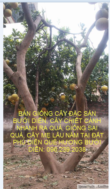 http://www.raovat.info/upload/2019-01-28/u157490-anh_001.png