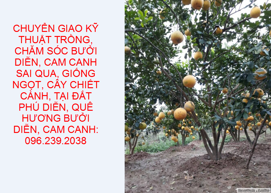 http://www.raovat.info/upload/2019-07-17/u164678-anh25.png